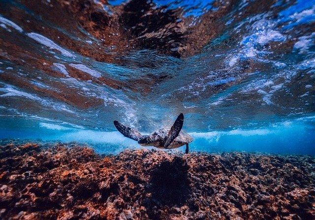 沖縄の自然